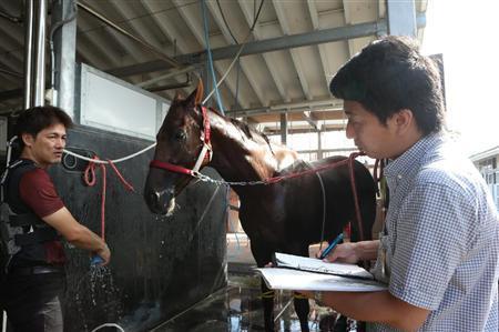 【菊花賞】血統的に見てどの馬買えばいいんだよ?なあ