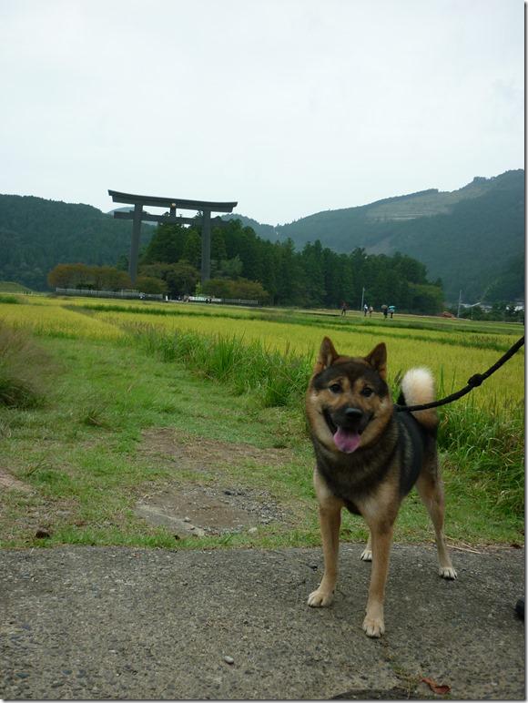 201610熊野詣旅05-08
