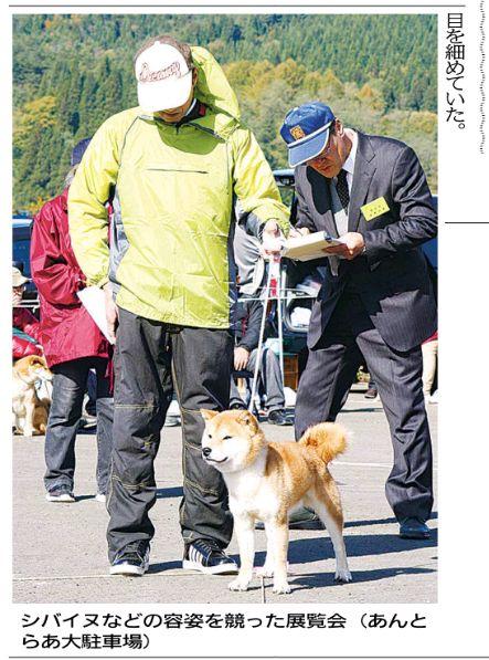 秋田県の県北で行う日本県展覧会に地元からの秋田犬の出品無し! これでいいのか?