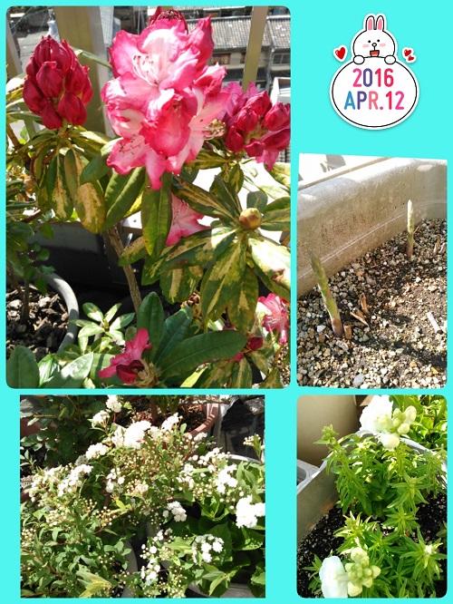 16-04-12-20-08-44-070_deco.jpg