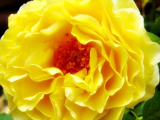 あの日見たひまわりの花を忘れない
