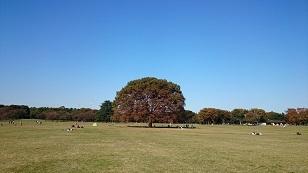 161104昭和記念公園1