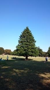 161104昭和記念公園2