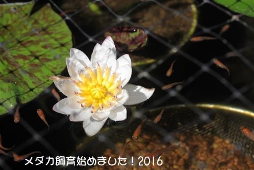 IMG_4251_20161020183406d6d.jpg