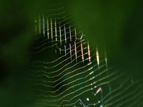 蜘蛛の巣虹色21