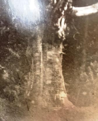 巨木の下の二人smaii