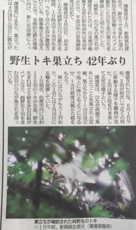 野生トキ記事