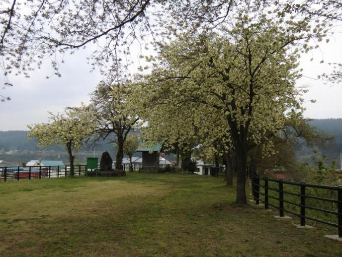 黄桜の丘6