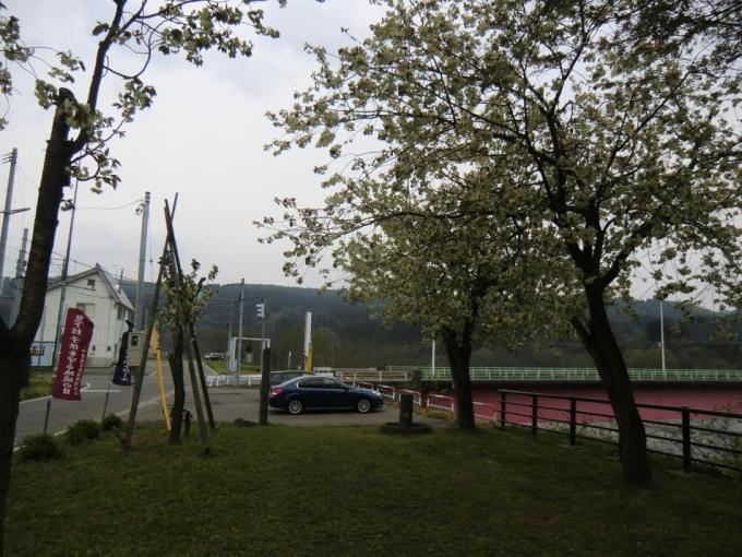黄桜の丘7