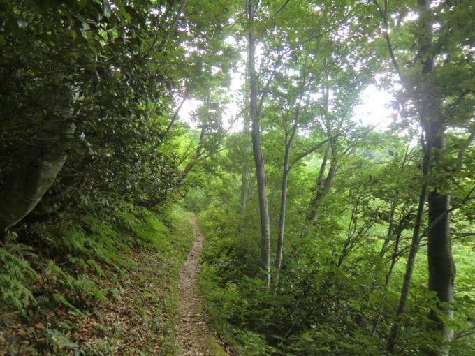 ブナ林水平道