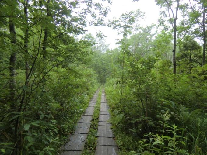 滑りまくりの木道