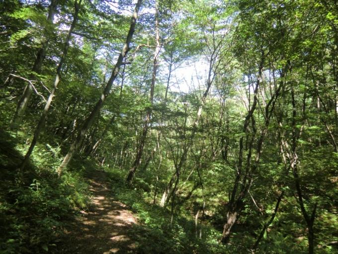 明るい樹林帯