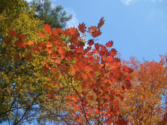 上ノ山公園4