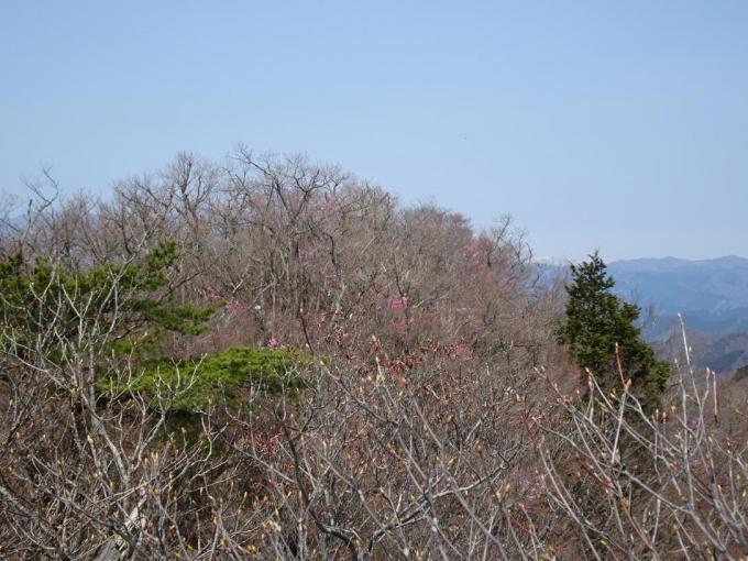 桐生岳から仁田山岳