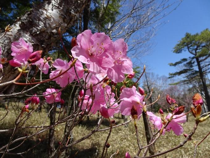 ピカピカの花