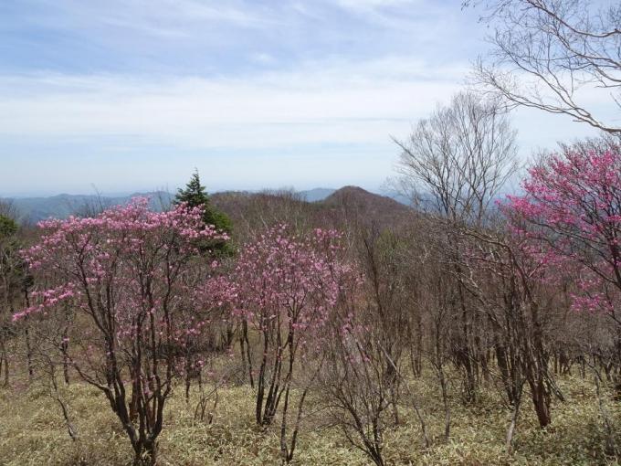 前方の山もピンク