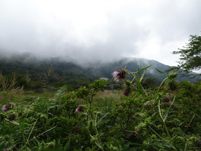アザミと地蔵岳