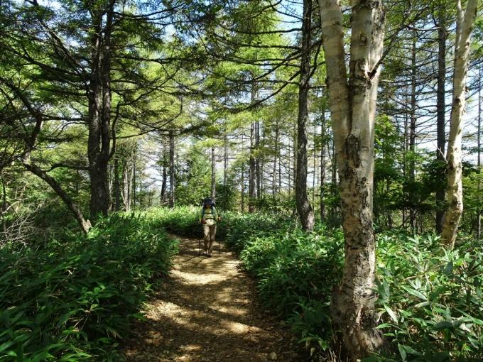 林間を行く