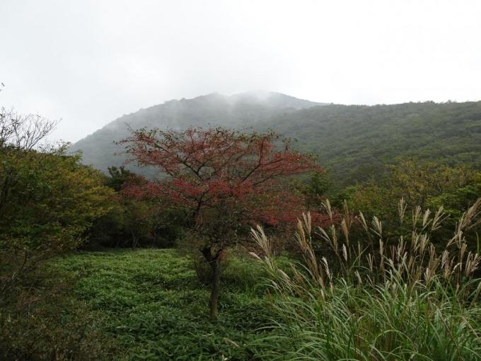 ズミの木、ススキと荒山