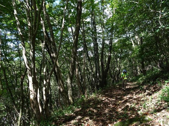 明るい樹林帯の道