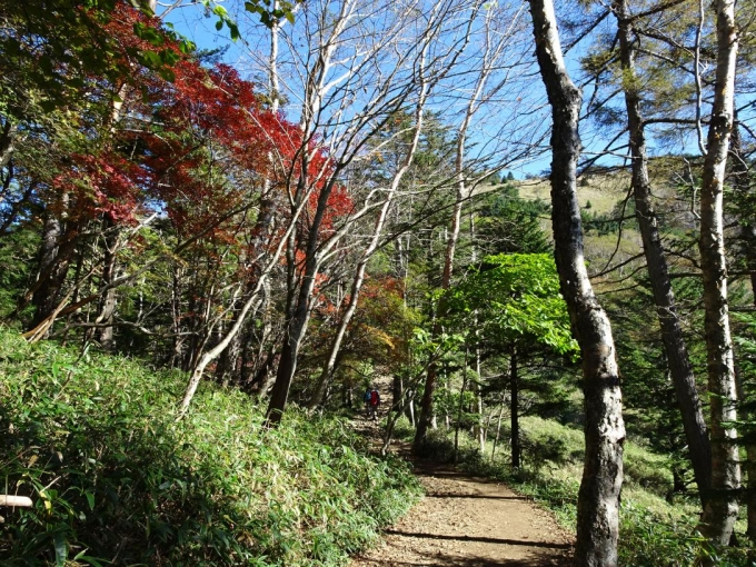 落葉松尾根の紅葉