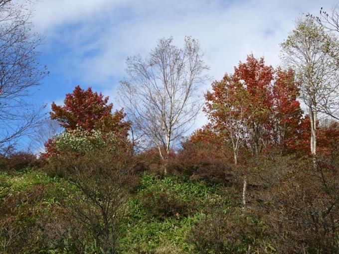 小沼の紅葉