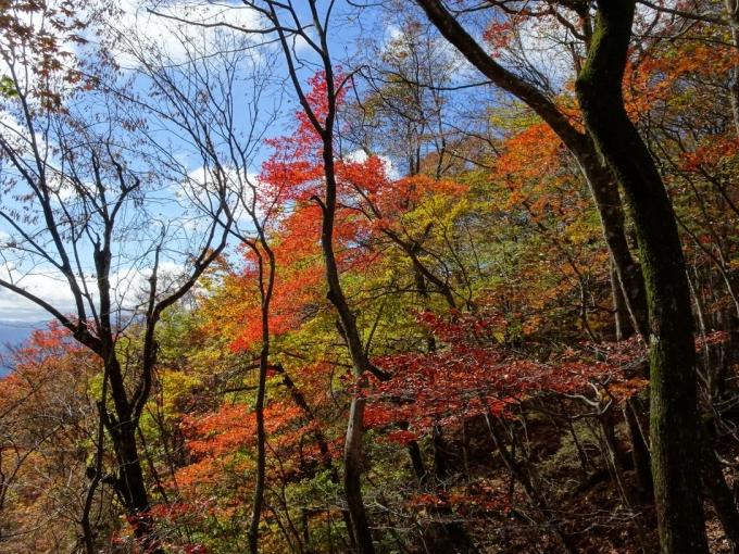 稜線の紅葉