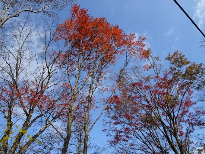 紅葉を見ながら2