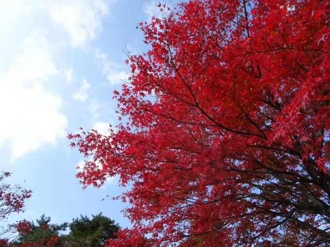 上ノ山公園7