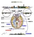 脳内映像メカニズム