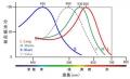 錐体細胞分光吸収率