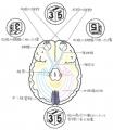 外在医療先端視神経概念図