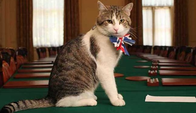 Foreign-Office-employs-chief-mouser-Palmerston-the-cat.jpg