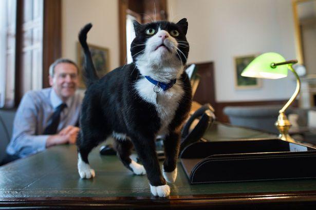 Palmerston.jpg