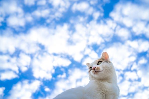 cat_sky01.jpg
