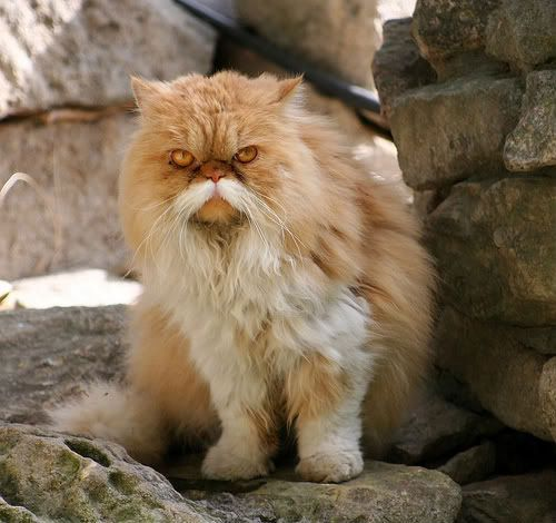 hige_cat15.jpg