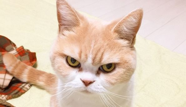 koyuki-the-cat-is-not-impressed-with-your-life-choices.jpg
