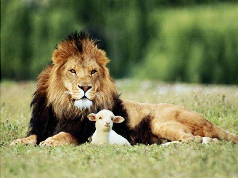 lionandlamb.jpg