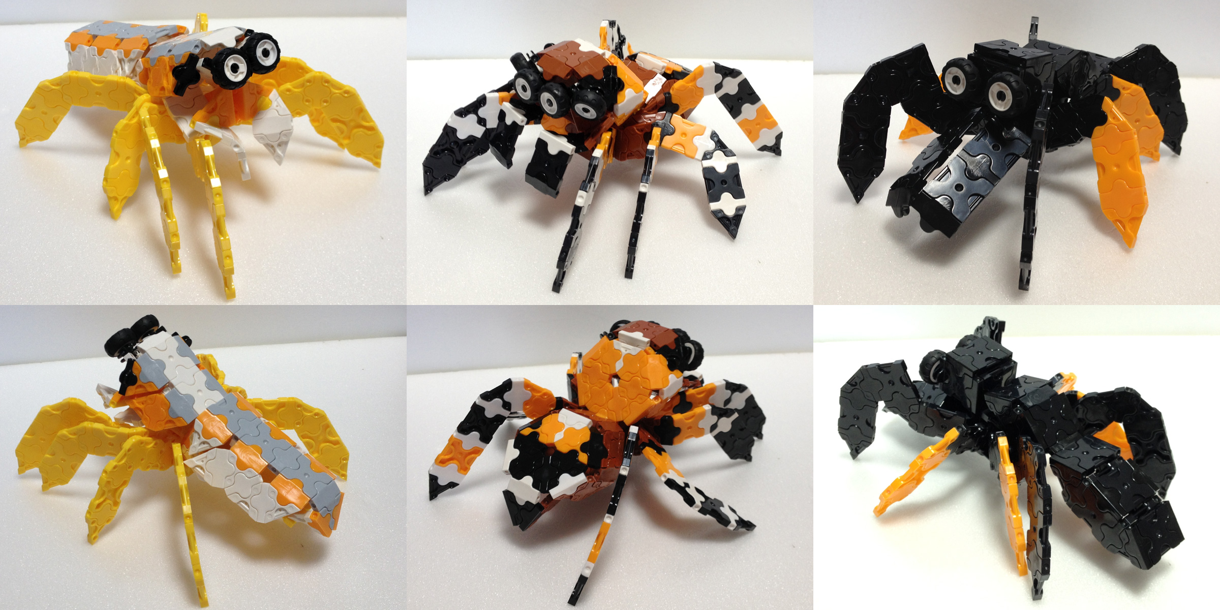 Spider5_IMG_0551.jpg