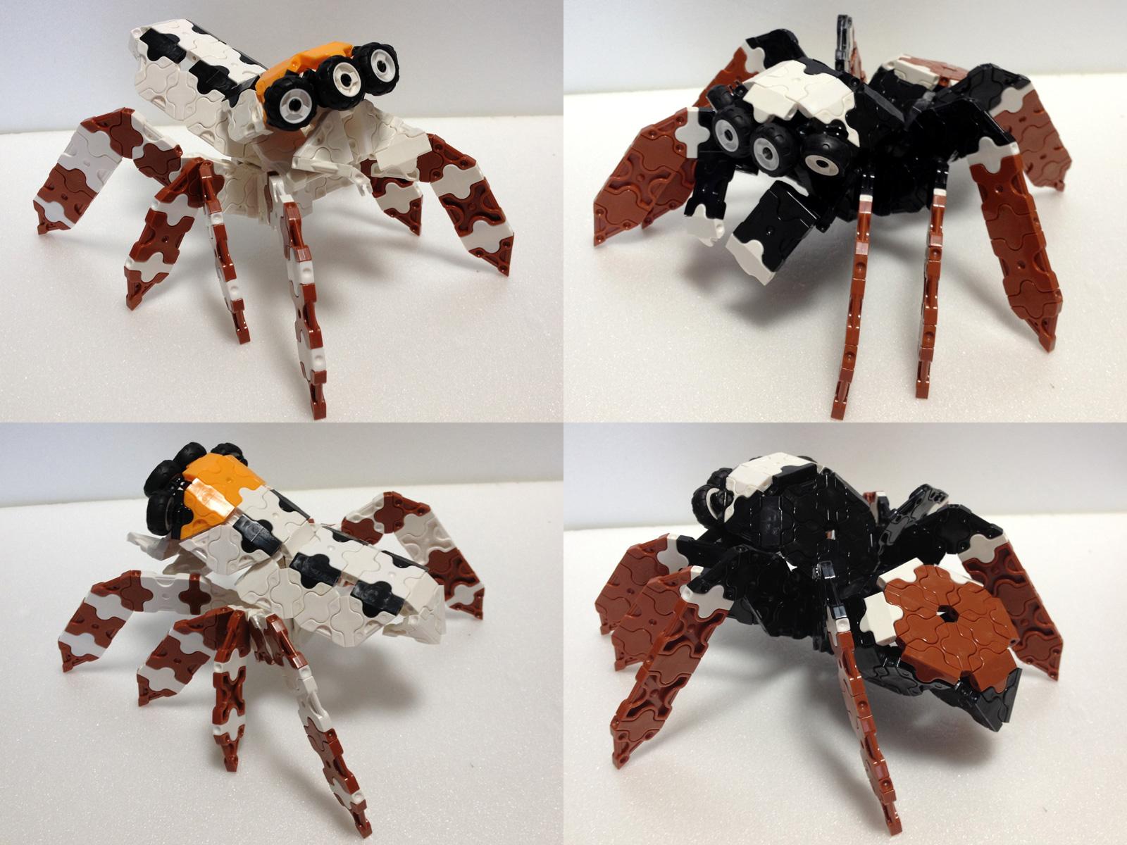 Spider5_IMG_0553.jpg