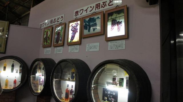 s-13ワイン用ブドウ説明