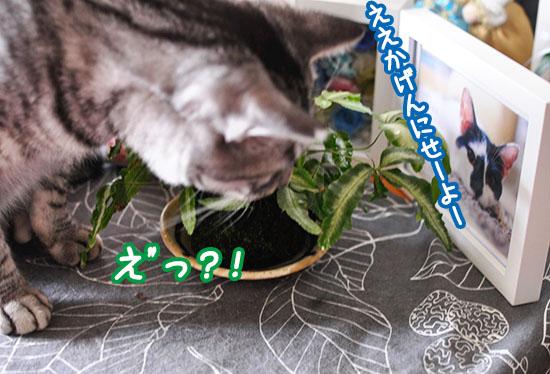 160804_kokedama_luck_rock.jpg
