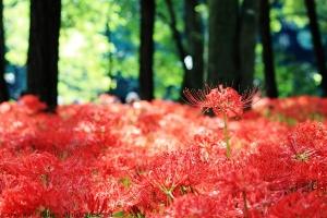 赤の絨毯s