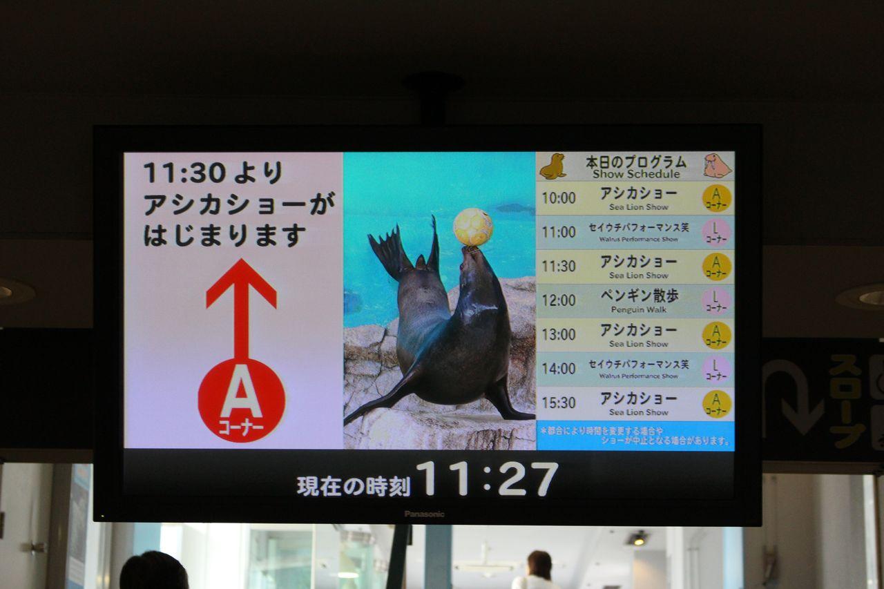 鳥羽水族館-22