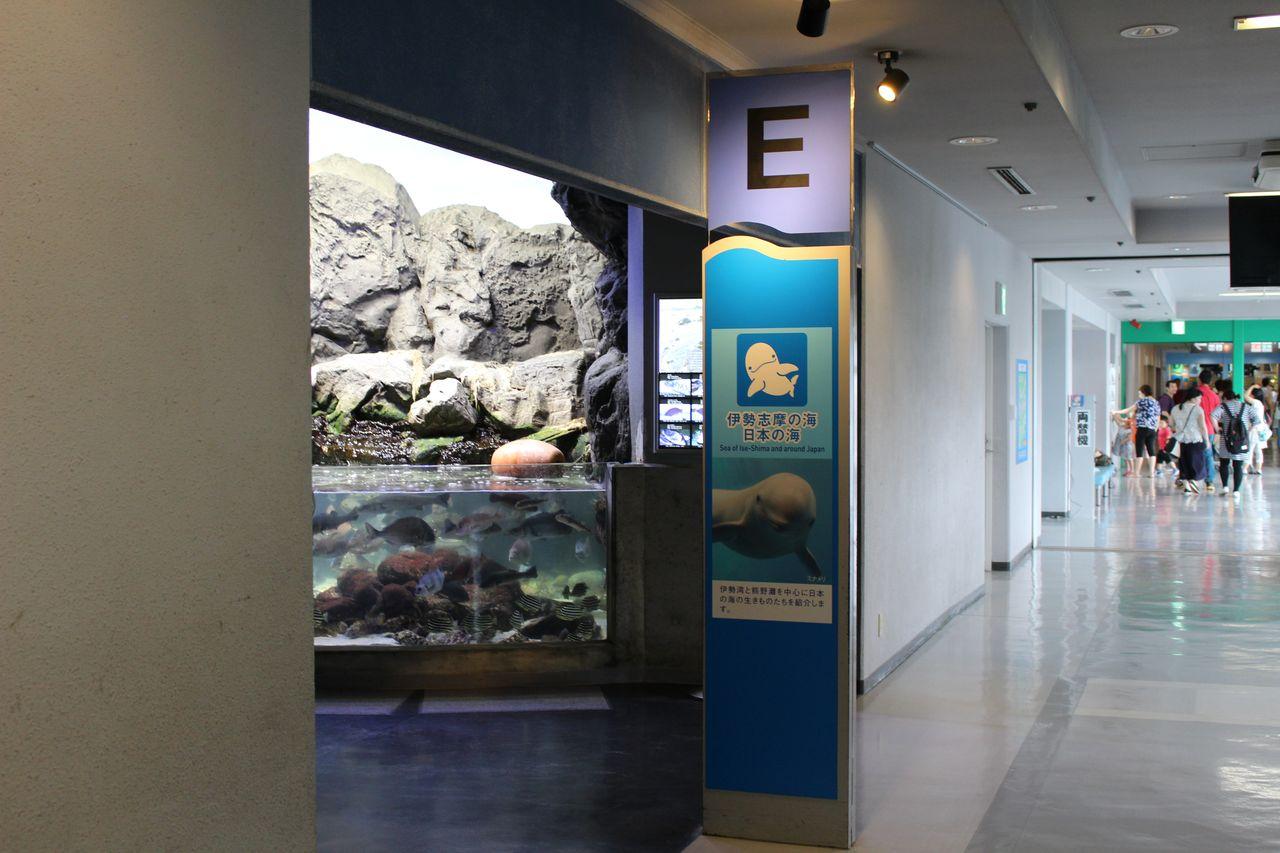 鳥羽水族館-52