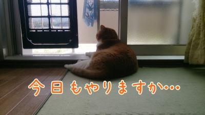 DSC_0401-01.jpg