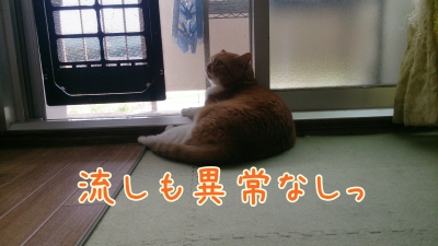 DSC_0402-01.jpg