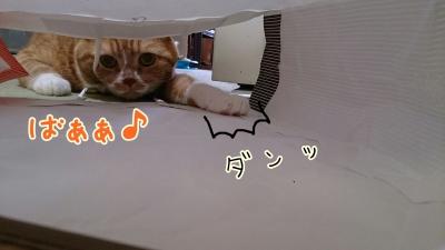 DSC_0410-01.jpg