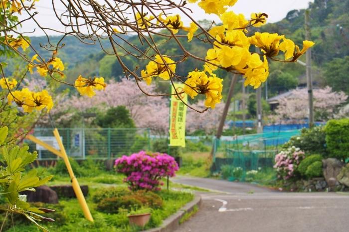 事務所前の花々