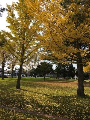 20161028 北海道の秋 犬の散歩